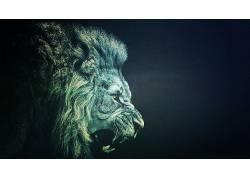 狮子,极简主义,动物591404