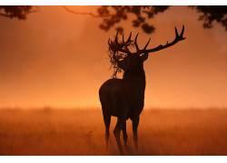 阳光,鹿,性质,动物558683