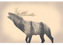 雄鹿,动物,长时间曝光,森林,雄伟随意(频道),极简主义,麋鹿4856