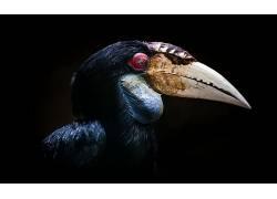 动物,鸟类610452