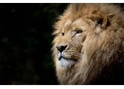 狮子,野生动物,非洲,摄影,简单609832