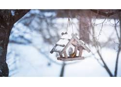 雪,冬季,冷,动物,鸟类474258