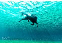 水,水下,性质,动物,游泳的,马,阳光,500px的,海,库尔特阿里戈4723