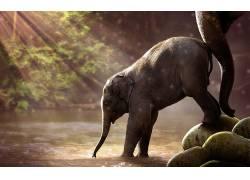 性质,动物,象,小动物,太阳光线,水532697