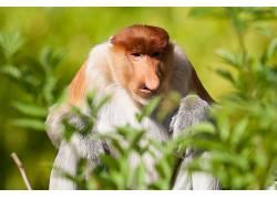 类人猿,性质,动物558120