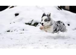 雪,冬季,狗,动物,小动物472061