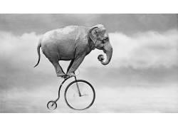 性质,动物,象,自行车,幽默,单色,地球,云,运动模糊372707