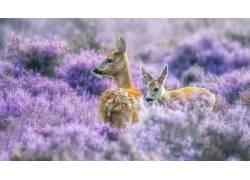 紫色,性质,植物,动物,鹿563745