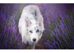 紫色,植物,花卉,狗,动物558663