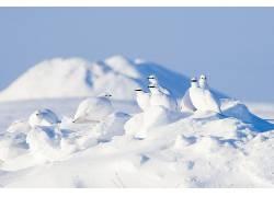 雪,冬季,白色,鸟类,动物610454