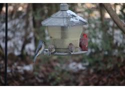 雪,冷,动物,鸟类473104