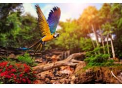 动物,鹦鹉,鸟类422665