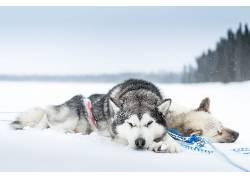 雪,冷,睡眠,狗,动物582440