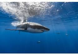 水下,鱼,鲨鱼,动物476053