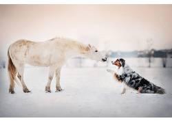 雪,动物,马,狗666715