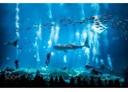 水族馆,鱼,动物,500px的,鲸鲨,蝠鲼,潜水644732