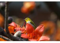 红,花卉,植物,动物,鸟类580424
