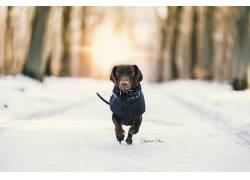 雪,性质,冬季,狗,动物558678