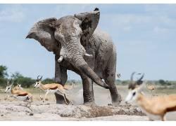 约翰巴纳德,500px的,性质,象,动物583254