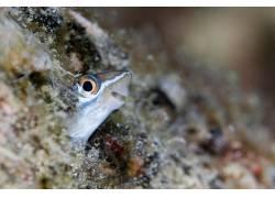 性质,动物,鱼,水,水下,景深,动物的眼睛,Tanakit Suwanyangyaun67