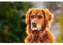 雪,狗,动物610466