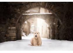 雪,狗,动物619458