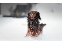 雪,狗,动物620594