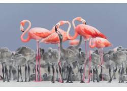 性质,动物,鸟类,小动物,火烈鸟,景深,墨西哥,亚历杭德罗普列托罗