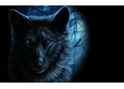 狼,幻想艺术,动物,艺术品411844