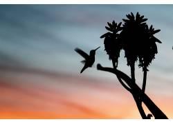 性质,动物,鸟类,日落,colibri(鸟)493724