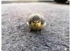 性质,动物,鸟类,景深,街,愤怒的小鸟,特写658370