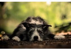 绿色,棕色,狗,动物569896