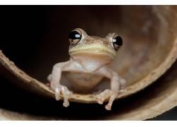 青蛙,动物634746