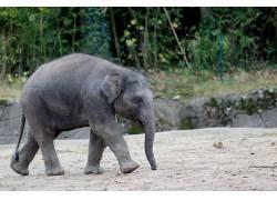 汉堡,动物园,象,小动物590482