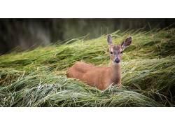 绿色,植物,鹿,动物555819