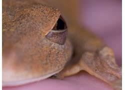 青蛙,野生动物575058