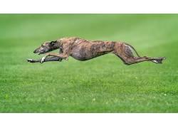 绿色,狗,动物,赛跑569059