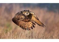 性质,动物,鸟类,猫头鹰,飞行571560