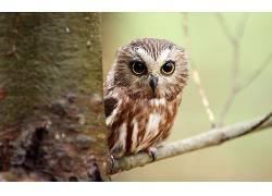 性质,动物,鸟类,猫头鹰373973