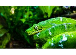 绿色,蛇,动物,旧金山496570