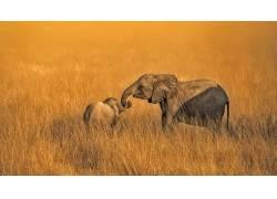 非洲,野生动物,性质,动物,象646935