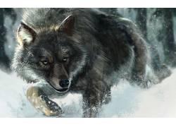 狼,雪,动物,野生动物494571