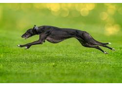 绿色,赛跑,狗,动物569058