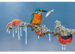 性质,动物,鸟类,科,冰柱,冬季,鱼,冰,Petar Sabol,晴朗的天空,翠