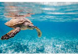 非洲,龟,性质,蓝色,海,动物380555