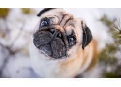 面对,动物,狗,泥料497237
