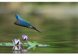 性质,动物,鸟类,翠鸟576026