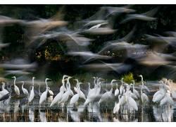 性质,动物,鸟类,长时间曝光,水,树木,飞行,反射,Zsolt Kudich,苍