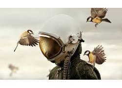 性质,动物,鸟类,马丁斯特兰卡,飞行员,头盔,天空,照片处理,水滴,