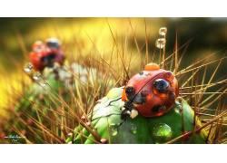 法里德甘巴里,数字艺术,艺术品,动物,瓢虫,荆棘,昆虫,水滴,3D,仙